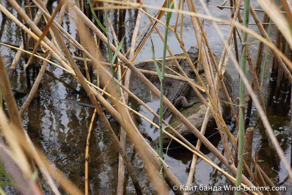 Маленький крокодильчик на берегу крокодильего озера