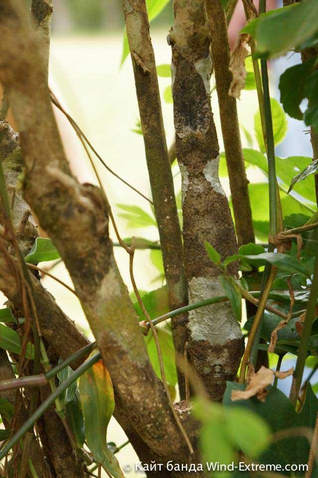 Игра «Найди Хамелеона» на Мадагаскаре