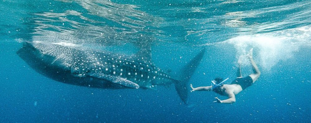 Путешествие по Филиппинам - кайт и плавание с акулами